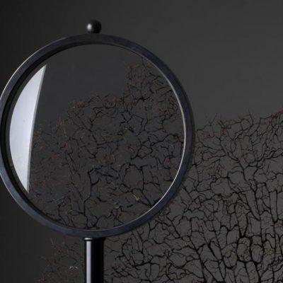 darwin-magnifier-detail