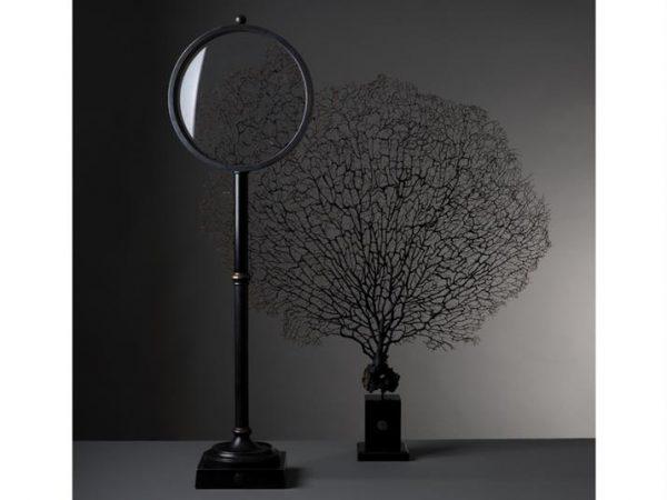 darwin-magnifying-glass-roo